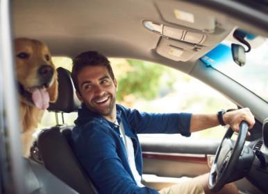 Uber lança o Uber Pet, modalidade para levar animais em viagens